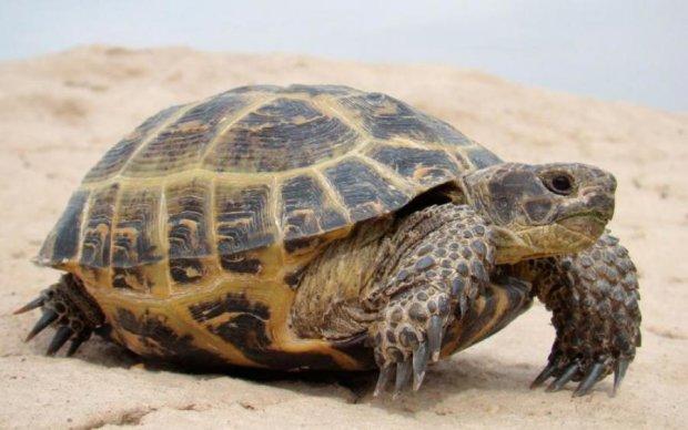 Ученые выяснили, как выглядел предок животных: фото