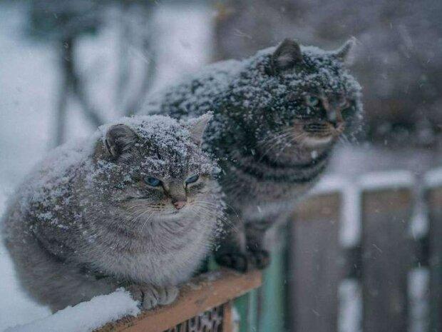 Погода в Харкові на Різдво 7 січня: стихія готує українцям справжню зимову казку