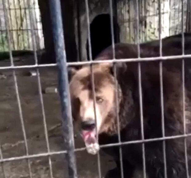 Ведмідь, кадр з відео: Facebook Ірина Галай