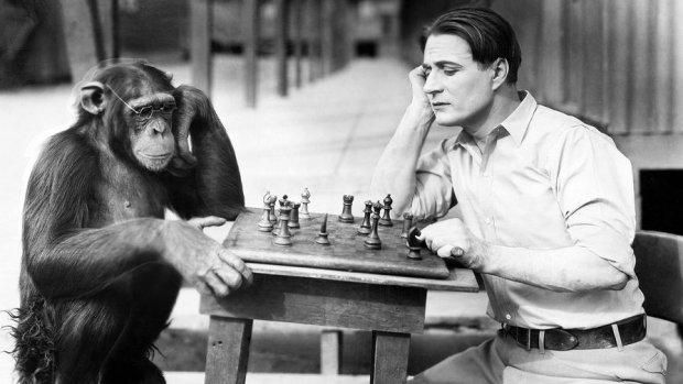 человек и обезьяна