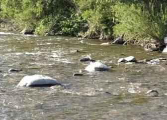 """У річці на Закарпатті """"розвелись"""" брудні памперси замість риби - """"Освіжитися у воді якось не тягне"""""""
