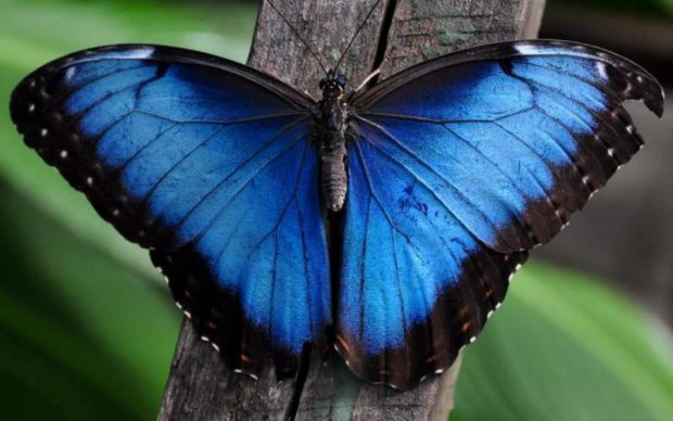 Маленькие гении: самые умные насекомые в мире