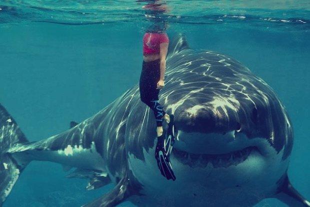Как вам такое? Ученые нашли первую акулу-вегана