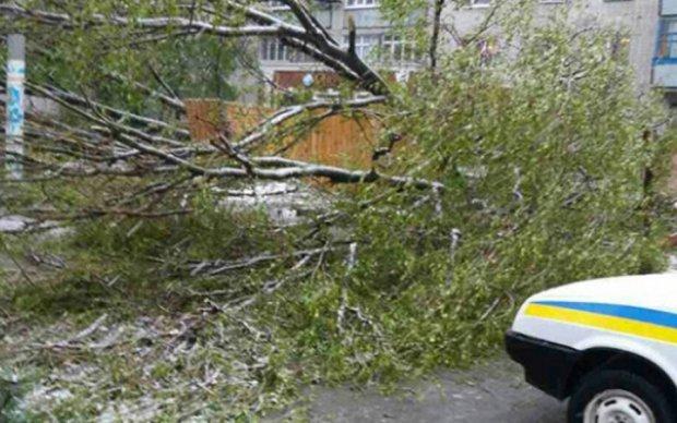 Жертва негоди: дніпровську пенсіонерку вбило дерево