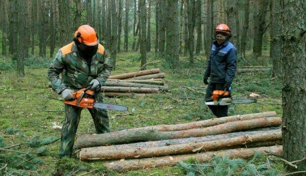 Вырубка лесов, фото 112 Украина