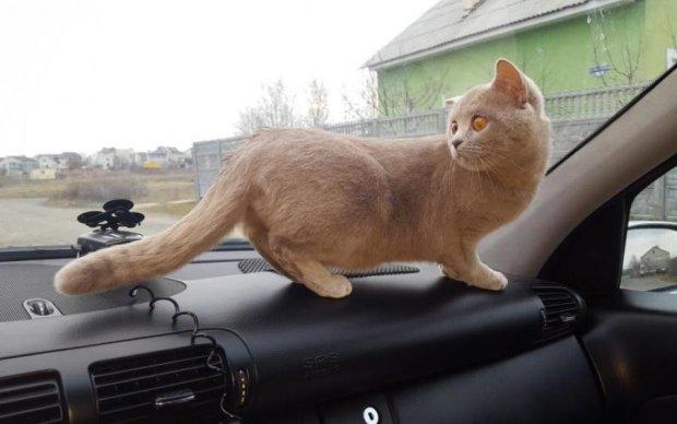 Кішка зрешетила дорогезний салон Mercedes: сума збитків вражає