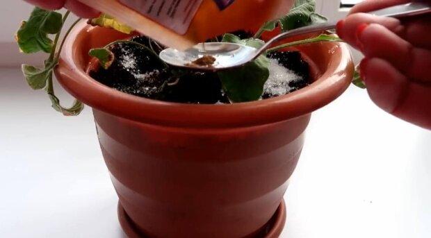 Растение / скриншот из видео