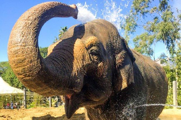 В Індії незграбний мийник потрапив під слона: відео страшної смерті