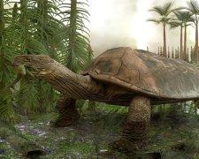 Древняя черепаха