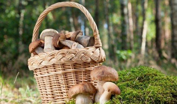 Во львовских лесах ищут пропавших грибников