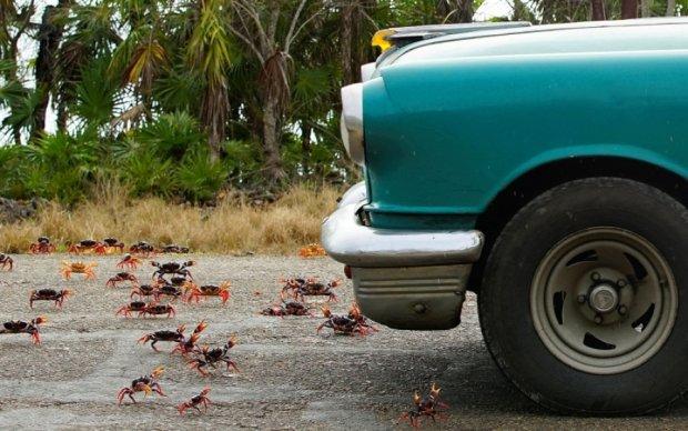 Куба опинилася в полоні крабової навали