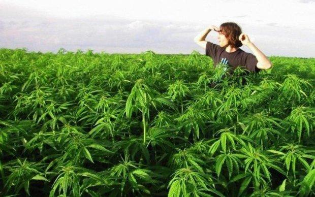 Настоящий фермер: военный расставил растяжки вокруг конопляного поля