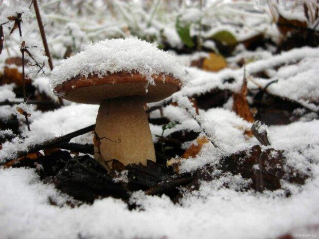 Всі до лісу: які гриби ще можна знайти взимку, слушні поради