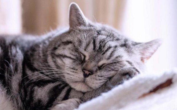 Топ-5 популярнейших мифов о сне