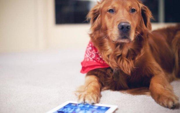 У собак появится собственный планшет