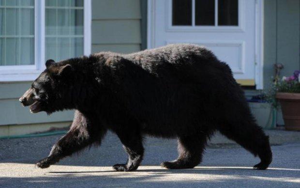 Чим займаються дикі ведмеді в гостях: відео