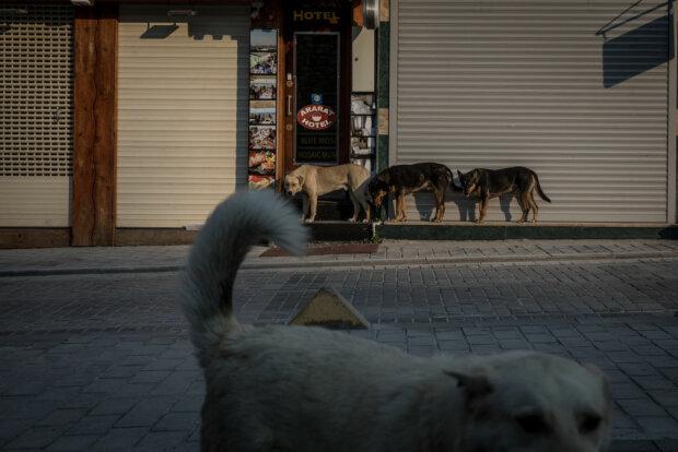 Собаки, фото: Getty Images