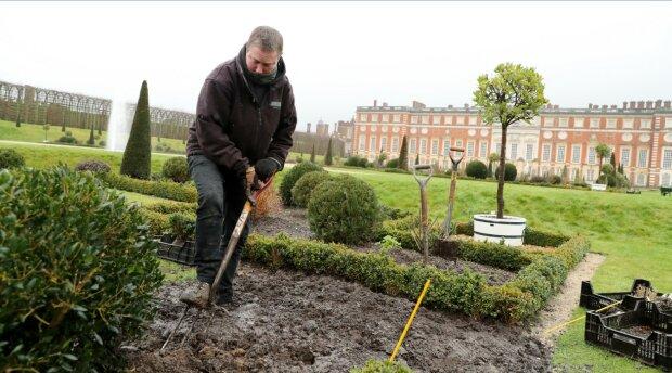 Садівництво, фото: Getty Images