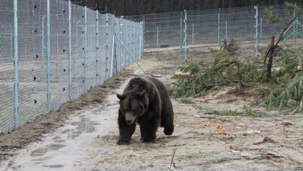 Ведмідь намагався пообідати українкою на популярній базі відпочинку
