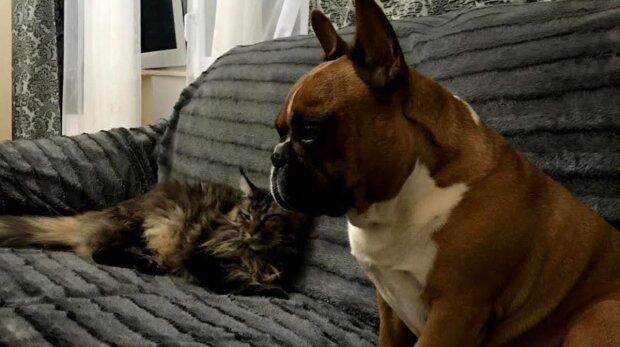 Собака и кошка, фото: Знай.ua