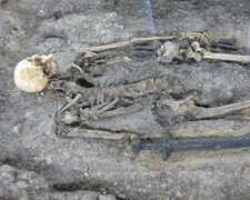 Скелет, BBC