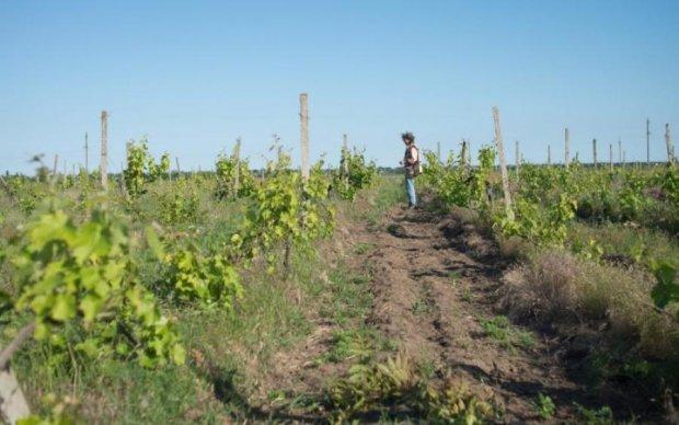 Винороба Лакарена звинувачують у рейдерстві