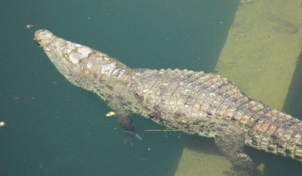 В крымском сафари-парке львицы съели крокодила