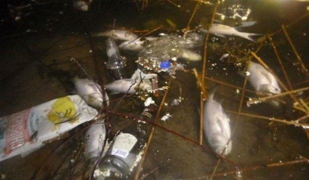 Очередное киевское озеро стало кладбищем для рыбы