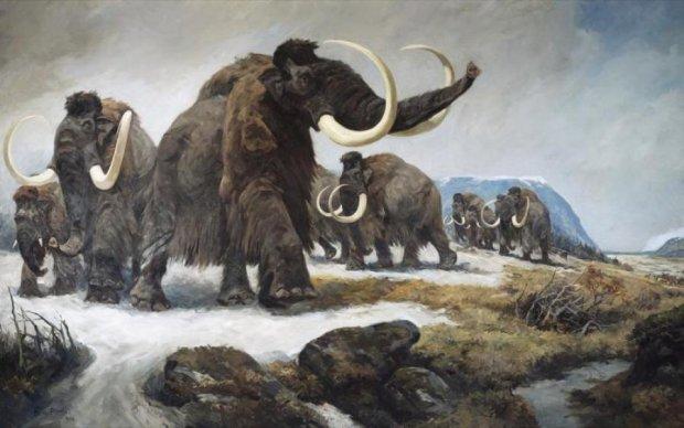 Дуже довго чекали: вчені відродять пухнастих слонів
