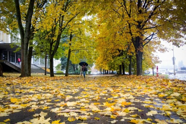 Осінь посилає прощальний поцілунок: останнє тепло зігріє Вінницю 17 листопада