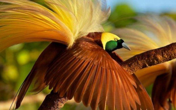 """Ученые назвали самую """"мозговитую"""" птицу. Вы удивитесь"""