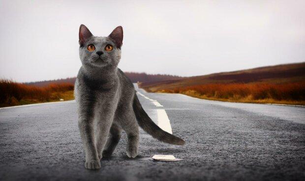"""Заслужена артистка познущалась зі збитої кішки: """"Не встигли приготувати шашлик"""""""