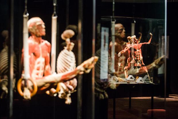 Выставка тел Body Worlds остается в Киеве, Body Worlds