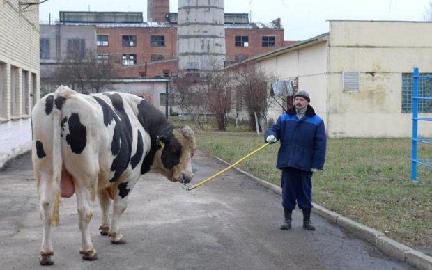 Не зупинили навіть кулі: гігантський бик влаштував шалений терор українцям