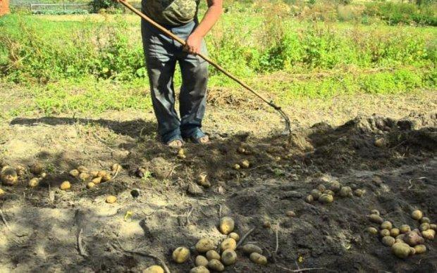 Вместо монет - картофель: НБУ вернет украинцев к традициям прошлого