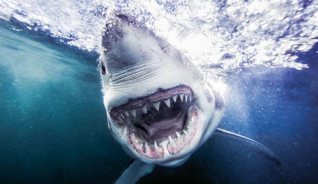 Відчайдушний фотограф поліз в пащу морського монстра заради ідеального знімка