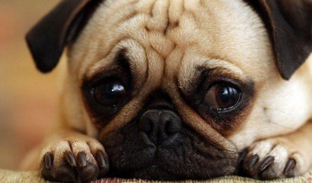 В Италии собакам запретили лаять во время Сиесты