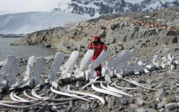 Український полярник зберігає в морозилці невідомих тварин