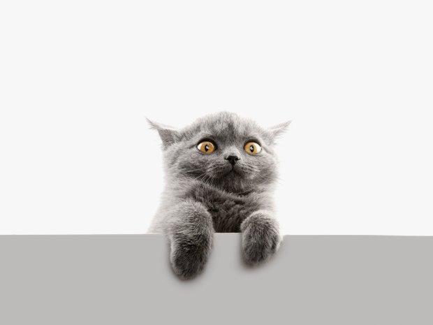 Коти викликають шизофренію: мікробіологи виявили шокуючу закономірність