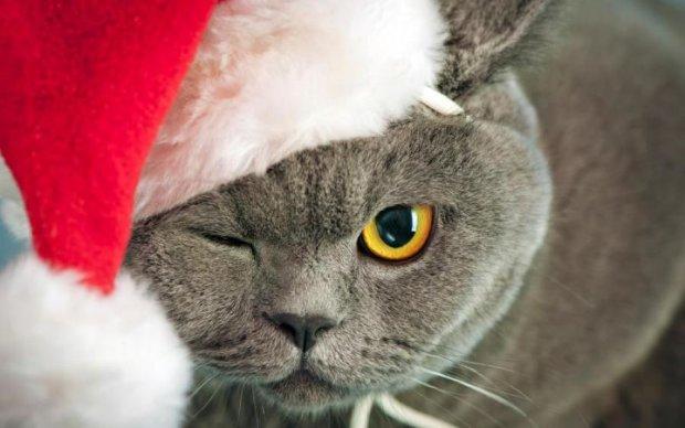 Новогодний лайфхак: найдено гениальный способ спасения елки от кошек