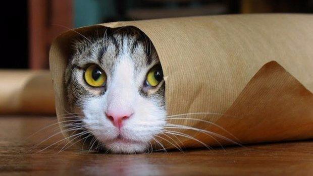 Котів і собак більше не можна продавати: зоомагазини підраховують збитки