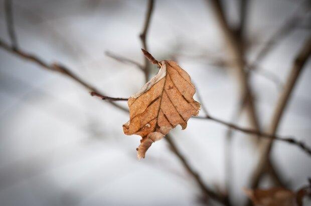 З примхи стихії львів'яни намокнуть і змерзнуть 14 грудня