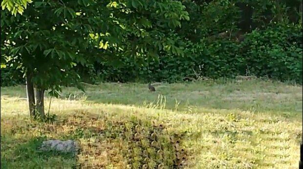 Запорожье оккупировали зайцы, пока горожане сидели на карантине