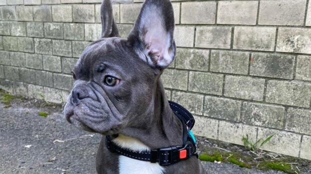 Собака, фото: Знай.ua