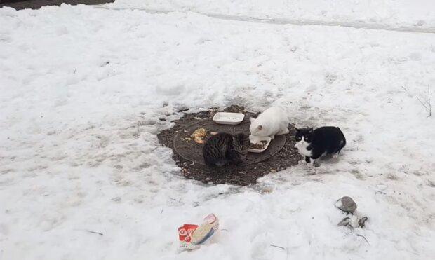 Бездомные коты, кадр из видео