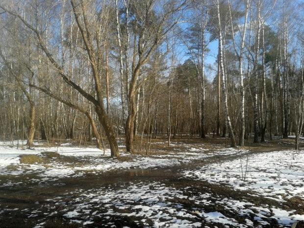 Погода на 31 января: еще месяц зимы, а весна уже пришла