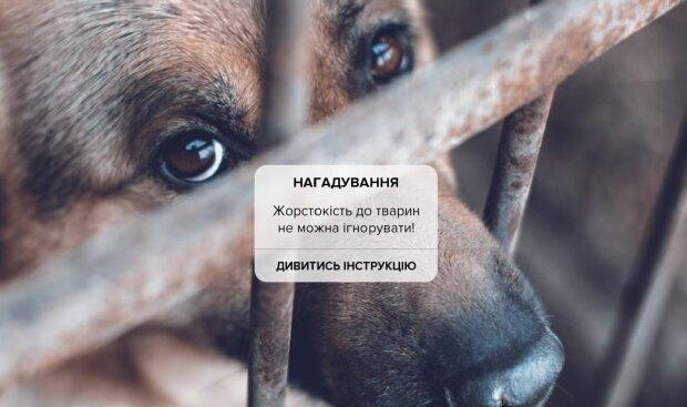 Публикация МВД Украины, скриншот: Facebook
