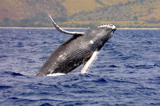 Тело огромного кита обнаружили посреди леса: видео