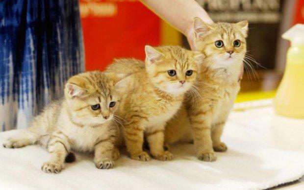 Возьми котика домой: украинские звезды снялись в трогательном фотопроекте