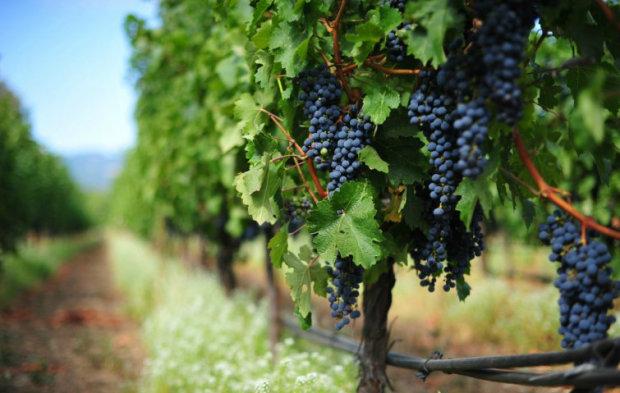 Археологи знайшли старовинний маєток багатія: вирощували виноград і виробляли вино